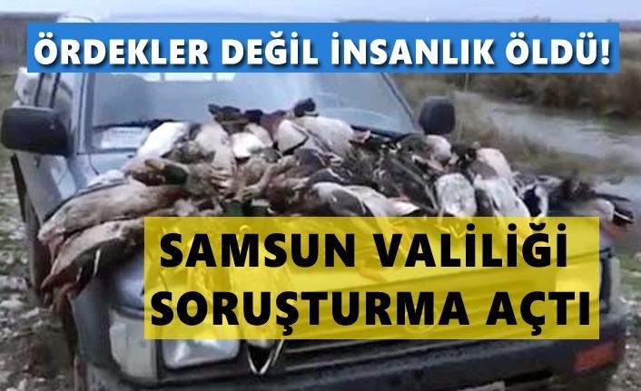 Samsun'da ördek katliamına soruşturma açıldı