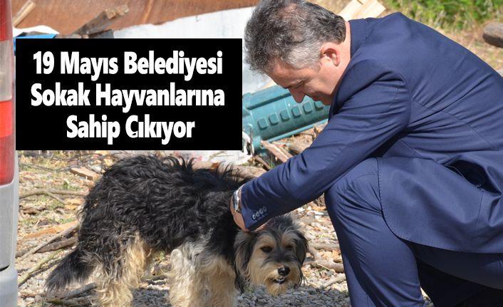 19 Mayıs Belediyesi Sokak Hayvanlarına Sahip Çıkıyor.