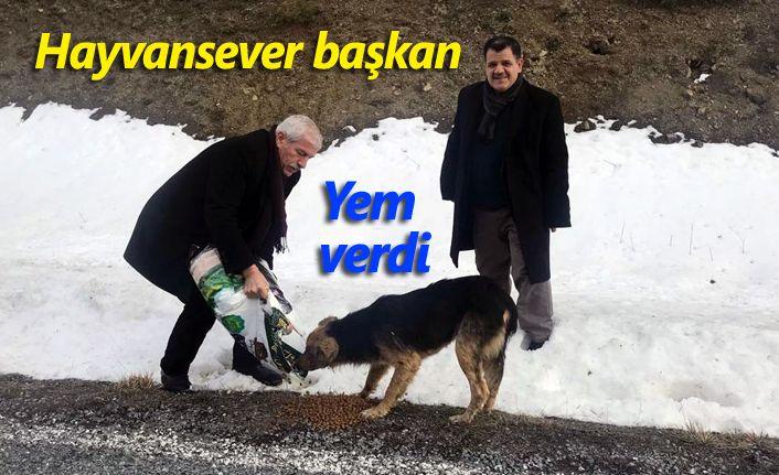 Başkan Uyar Sahipsiz Sokak Hayvanlarına Yem Bıraktı