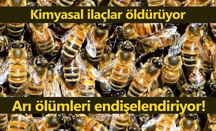 Arı Kolonisi Kayıplarını En Aza İndirmek İçin Yapılması Gerekenler
