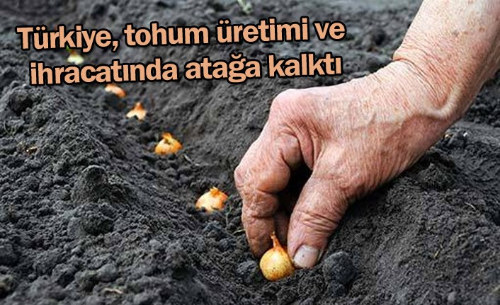 Türkiye tohum üretimi ve ihracatında atağa kalktı