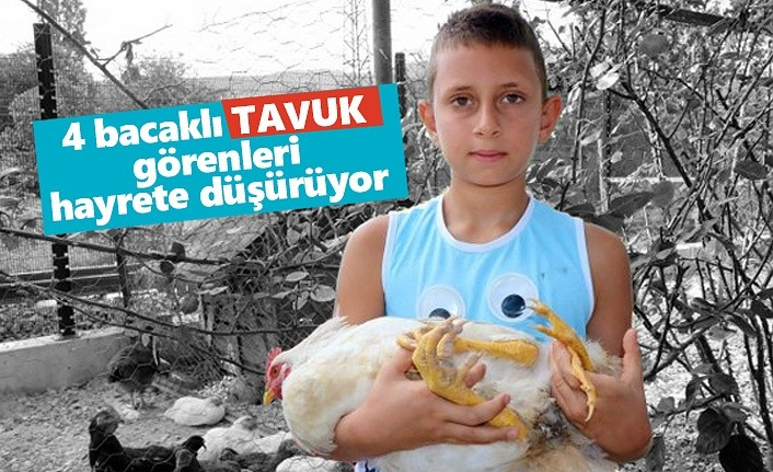 Samsun'da 'Beyaz Pençe'' yi görenler hayret ediyor