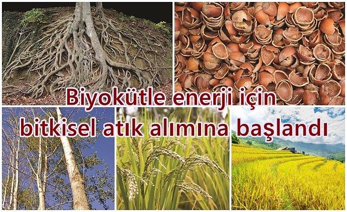 Biyokütle enerji için bitkisel atık alımına başlandı