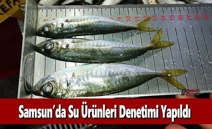 Samsun'da Su Ürünleri Denetimi Yapıldı