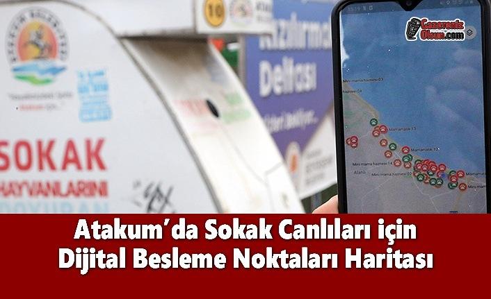 Atakum'da Sokak Canlıları için Dijital Besleme Noktaları Haritası