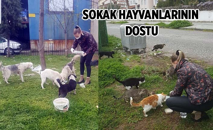 Samsun'da iş kadını sokak hayvanlarını besleyerek örnek davranış sergiliyor