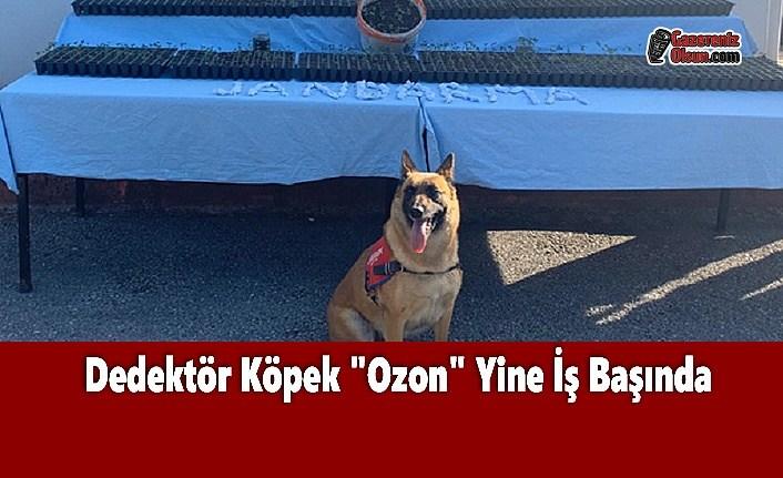 Dedektör Köpek 'Ozon' Yine İş Başında