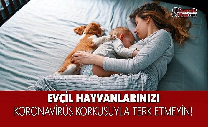Evcil Hayvanlarınızı Koronavirüs Korkusuyla Terk Etmeyin