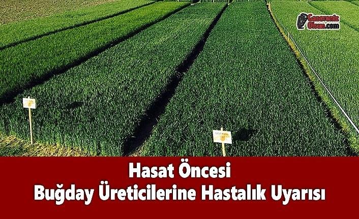 Hasat Öncesi Buğday Üreticilerine Hastalık Uyarısı