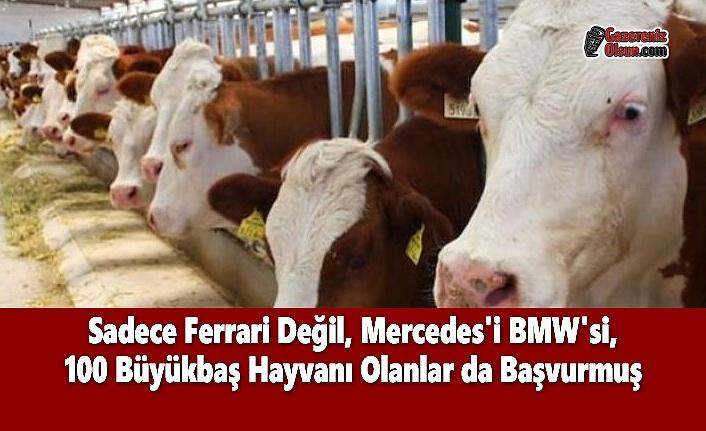 Sadece Ferrari Değil, Mercedes'i BMW'si, 100 Büyükbaş Hayvanı Olanlar da Başvurmuş