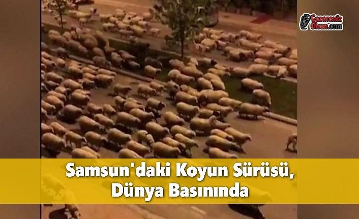 Samsun'daki Koyun Sürüsü, Dünya Basınında