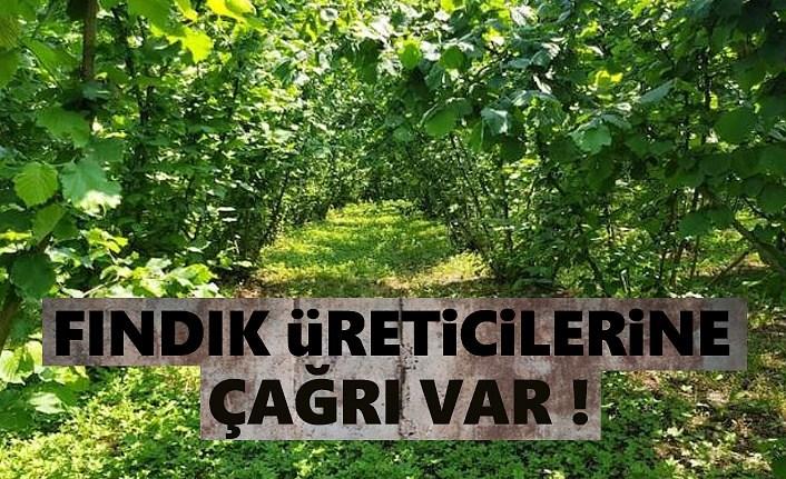 Fındık üreticisine Bahçeye Gel çağrısı