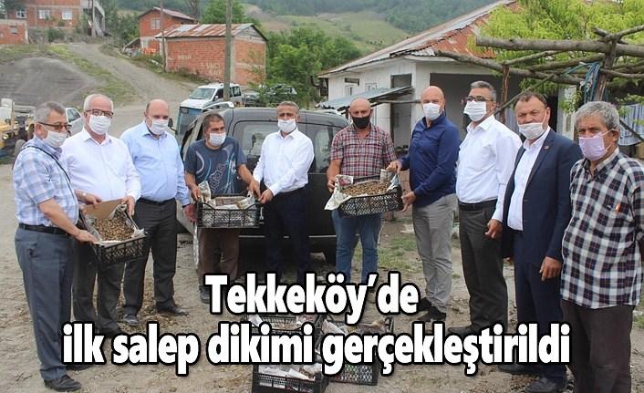 Tekkeköy'de ilk salep dikimi gerçekleştirildi