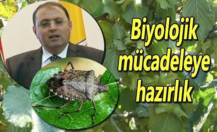 Fındıkta Biyolojik mücadeleye hazırlık
