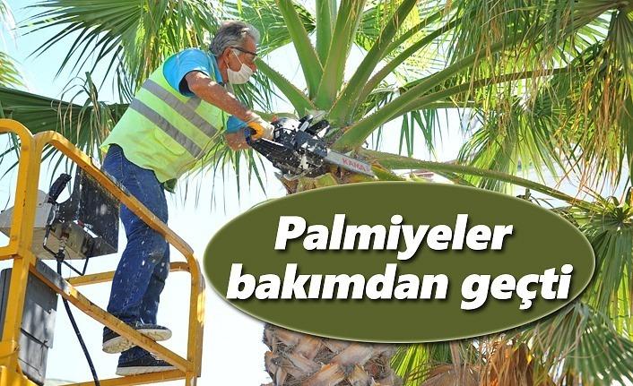 Palmiyeler bakımdan geçti