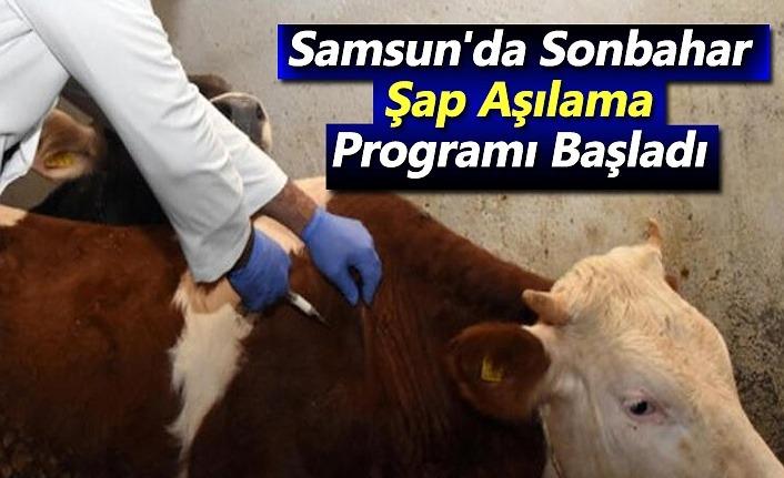Samsun'da Sonbahar Şap Aşılama Programı Başladı