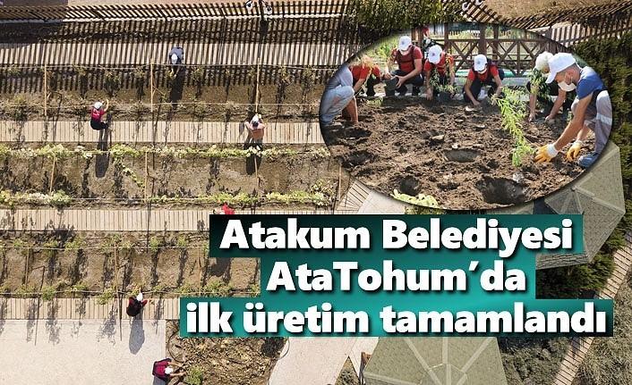 Atakum Belediyesi AtaTohum'da ilk hasat