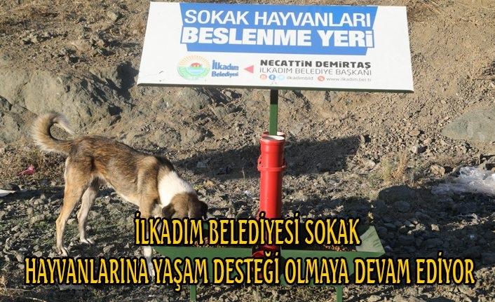 İlkadım Belediyesi sokak hayvanlarına yaşam desteği olmaya devam ediyor