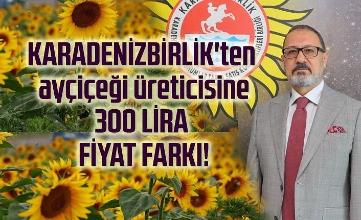 KARADENİZBİRLİK'ten ayçiçeği üreticisine 300 lira fiyat farkı!