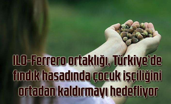 ILO-Ferrero ortaklığı, Türkiye'de fındık hasadında çocuk işçiliğini ortadan kaldırmayı hedefliyor