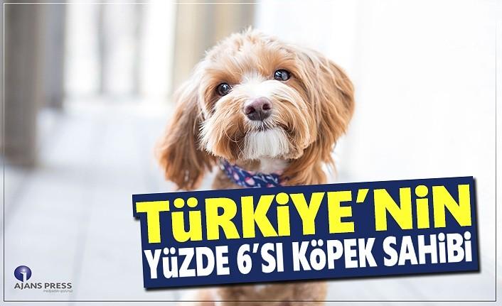 Türkiye'nin Yüzde 6'sı Köpek Sahibi