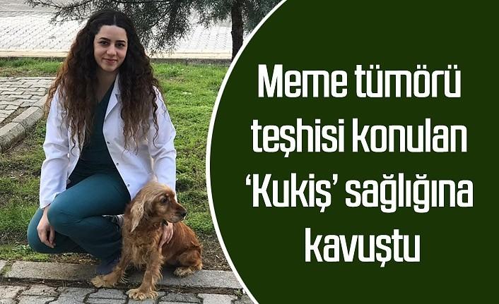 Meme tümörü teşhisi konulan 'Kukiş'e başarılı operasyon