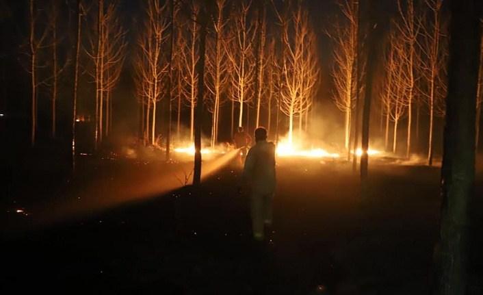 Samsun'da orman yangınları söndürüldü