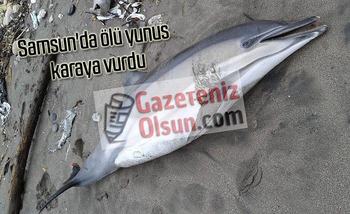 Samsun'da ölü yunus karaya vurdu - Samsun Haber
