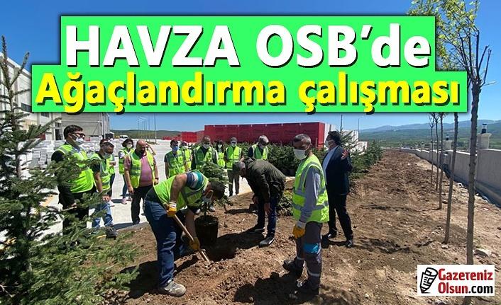 Havza OSB'de ağaçlandırma çalışması