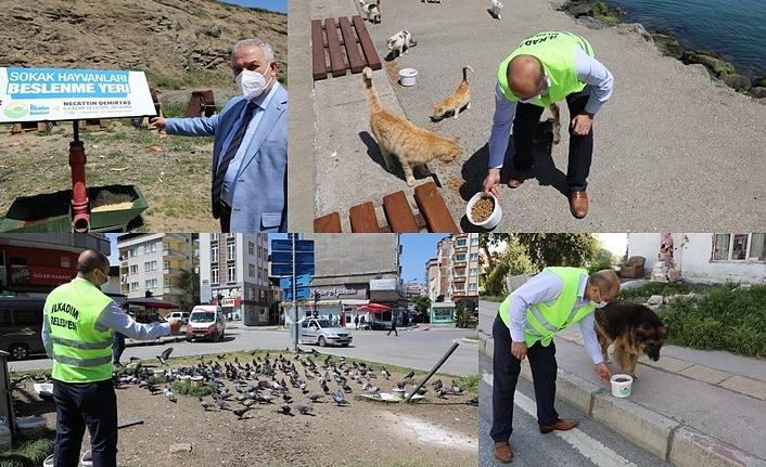 İlkadım Belediyesi Bayramda da sokak hayvanlarını unutmadı