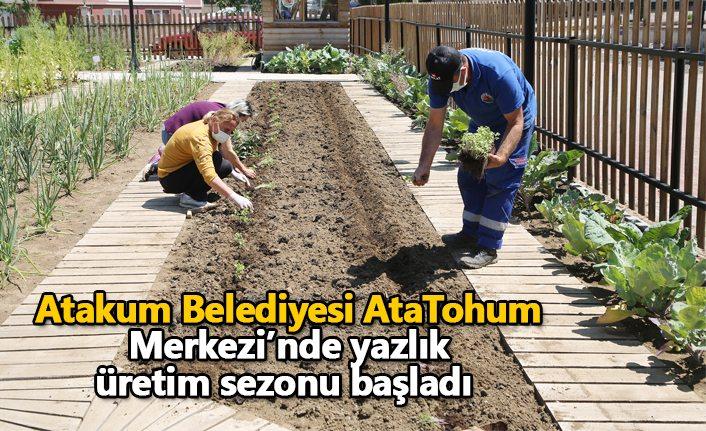 Atakum Belediyesi AtaTohum Merkezi'nde yazlık üretim sezonu başladı