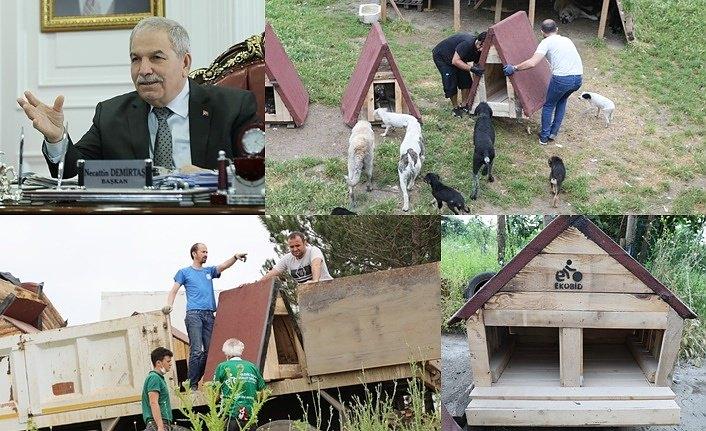 Sokak hayvanları için kulübe çalışmasına Başkan Demirtaş'ta destek çıktı