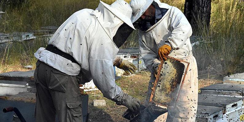 Arı yetiştiricilerine destek ödemelerine başlandı