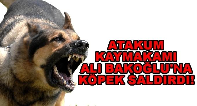 Atakum Kaymakamı Ali Bakoğulu'na köpek saldırdı