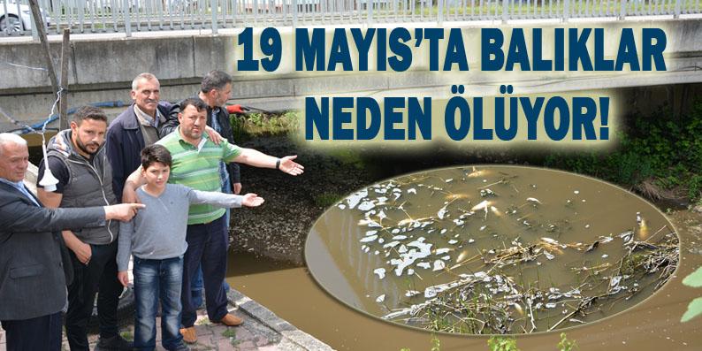 Balık ölümleri Dereköy'ü ayağa kaldırdı