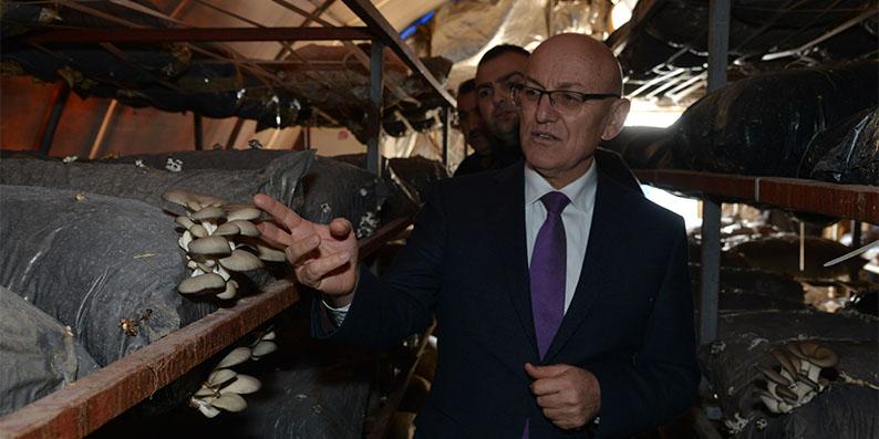 Başkan Kul istiridye mantarı üretim tesisini gezdi