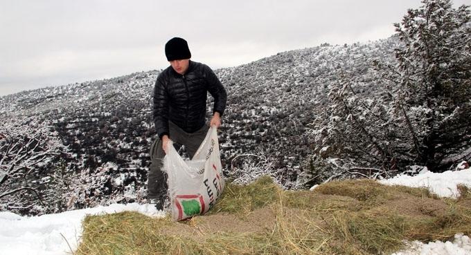 Bolu'da yabani hayvanlar için yem bırakıldı