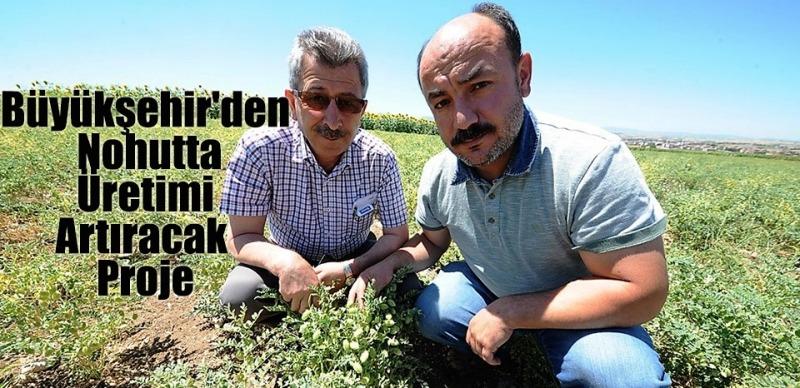 Büyükşehir'den Nohutta Üretimi Artıracak Proje