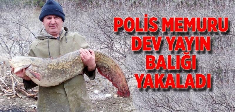Dev yayın balığını yakalamak için çok uğraştı!
