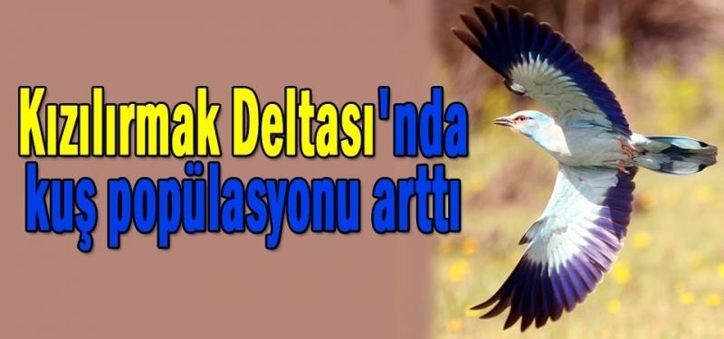 Kızılırmak Deltası Kuş Cenneti'nde artış var!