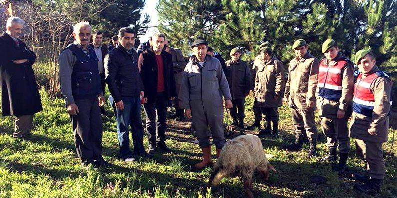 Mehmetçikler için kurban kestiler