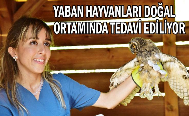 Samsun Büyükşehir Belediyesi vahşe doğaya sahip çıkıyor
