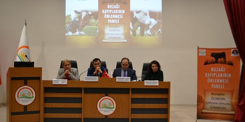 Samsun'da buzağı kayıplarının önlenmesi konulu panel düzenlendi