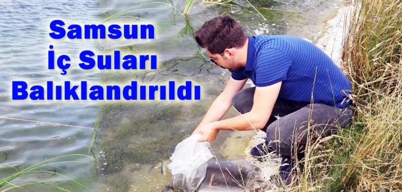Samsun'da göl ve göletlere sazan yavrusu bırakıldı