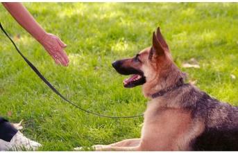 5 Maddede Köpekte Temel İtaat Eğitimi