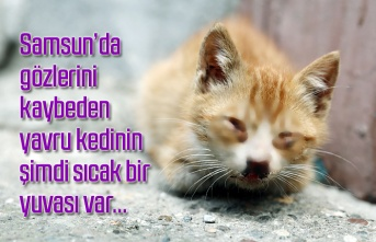 Gözlerini kaybeden yavru kedinin şimdi sıcak bir yuvası var - Samsun Haber