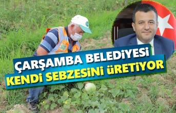 Çarşamba Belediyesi Kendi Sebzesini Üretiyor