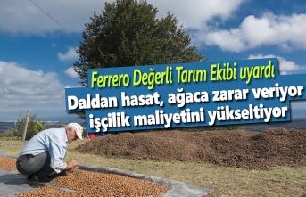 Ferrero Tarım Ekibi uyardı, Yerden toplama ürün kalitesini de yükseltiyor