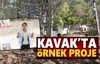 Kavak'tan örnek Proje