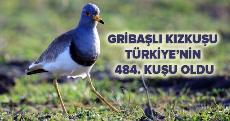 Türkiye'de yeni bir kuş türü Samsun'da bulundu